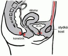 Ochabnutí svalů pánevního dna je časté u těhotných (zvýšeným tlakem plodu), s přibývajícími léty k němu často dochází u necvičících. Svaly brání poklesu, či dokonce výhřezu dělohy i obtížím s udržením moči. Potíže napravuje cvičení a odstranění dalších nepříznivých faktorů jako je dlouhé sezení, nečinnost, statická námaha, nadváha. Dobře fungující svaly pánevního dna jednak zabraňují uvedeným potížím a navíc umožňují intenzivnější prožití pohlavního styku. Existuje dokonce část jógy - tantra…