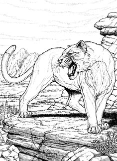 Cougar Coloring Pages: Do you want to teach your child about wildlife conservation? Well, then you must check out our Cougar coloring pages.