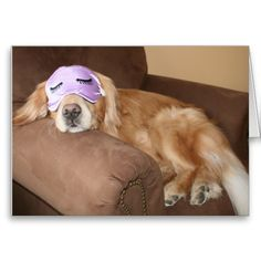 """Golden Retriever Retirement Greeting Card! Know someone who is newly retired? Send them a big CONGRATS! This card features a photograph of a cute golden retriever dog sleeping on a brown chair, while wearing a purple sleep mask with black eyelashes. Inside text reads: """"congrats on your retirement!"""""""