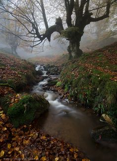 Misty forest and stream