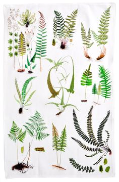 Embroidery Projects Ferns tea towel, x would make a pretty embroidery or watercolor project (herb shop logo) Herb Shop, Watercolor Projects, Watercolor Logo, White Towels, Modern Boho, Botanical Prints, Ferns, Tea Towels, Flower Power