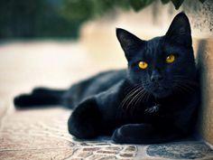 Brujipoema: A un gato de Jorge Luis Borges