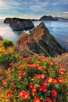 Though the Ice Plant is a beautiful addition to the island, it is considered an invasive species and is scheduled to be eradicated from the island by Inspiration Point, Anacapa Island, Channel Islands National Park, California by Jim Shoemaker Oh The Places You'll Go, Places To Travel, Places To Visit, Beautiful World, Beautiful Places, Channel Islands National Park, Channel Islands California, Photos Voyages, Parcs
