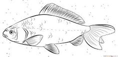 Image result for how to draw fish step by step