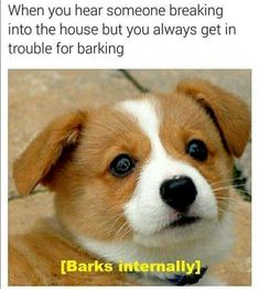 The Secret Of Barking