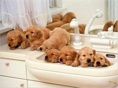 I want a golden retriever puppy :) Best dogs ever! This is a must during warm-hot summer days. cool bath is saving our pets. Cute Puppies And Kittens, Dogs And Puppies, Doggies, Funny Puppies, Funny Dogs, Baby Puppies, Brown Puppies, Labrador Puppies, Cute Puppy Pictures