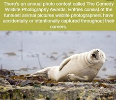 The Comedy Wildlife Photography Awards - WTF fun facts Wtf Fun Facts, Funny Facts, Strange Facts, Random Facts, Random Stuff, Funny Quotes, Comedy Wildlife Photography, Photography Awards, Funny Animal Pictures