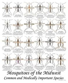 7 Best Mosquito Diseases Images Mosquito Disease Health Tips