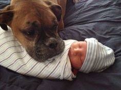 boxer with baby