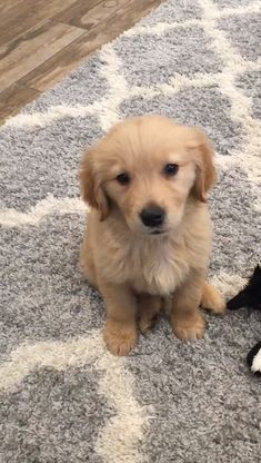 Super Cute Puppies, Cute Baby Dogs, Cute Little Puppies, Cute Dogs And Puppies, Cute Little Animals, Cute Funny Animals, Doggies, Baby Animals Pictures, Cute Animal Pictures