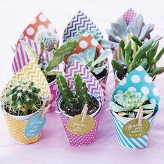 En primer lugar necesitas suculentas, en los centros de jardinería o viveros venden cactus y suculentas en recipientes pequeños, de unos 5 cm de diámetro, son los más económicos pero serán los indicados para este trabajo. Podrás elegir las mejores macetitas
