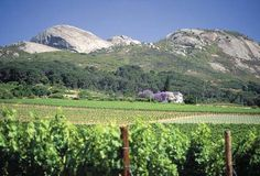 Paarl Out Of Africa, Cape Town, Mount Rainier, South Africa, Vineyard, Wine, Mountains, Travel, Image