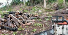 Em onze meses, desmatamento florestal ilegal na Amazônia aumentou 29% - http://anoticiadodia.com/em-onze-meses-desmatamento-florestal-ilegal-na-amazonia-aumentou-29/