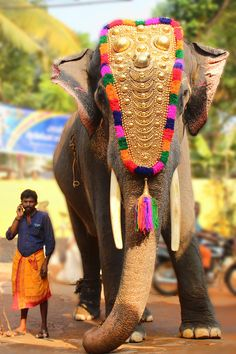 Festival in Kerala - Mahout oncell phone posing with his elephant