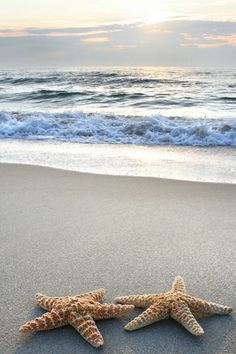 Comfortably numb! #starfish #sea #beach