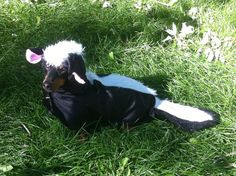 Wiener Dog Funny Skunk Costume