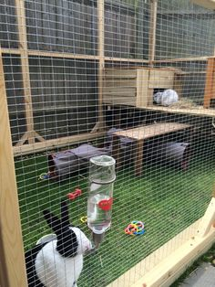 This is on of our walk in rabbit runs / aviaries we made for a customer.