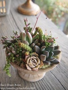 I love succulents!!