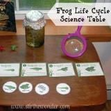 Frog Life Cycle Science Table - Stir The Wonder