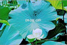 Australian Artist EM-DEE-EM Original Photograph ~ Digital Image ~ Oasis 3004-1