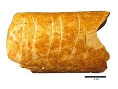 120,000-Year-Old Cattle Bone Carvings May Be World's Oldest Surviving Symbols | Smart News | Smithsonian Magazine