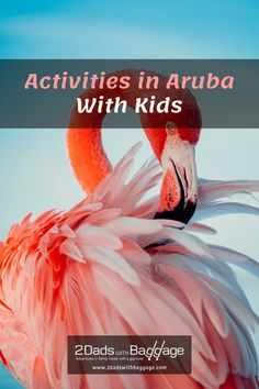 Activities in Aruba With Kids - 2 Dads with Baggage California Lighthouse, Butterfly Chrysalis, Get Up And Walk, Off Road Adventure, Natural Bridge, Giant Flowers, Swimming Holes, Colorful Fish, The Visitors
