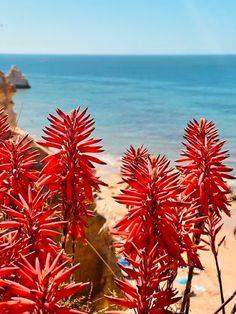 Olhares de Férias - Praia da Rocha em dois tons VIAJAR é alargar os nossos horizontes - Vamos de Férias Algarve, Places, Blog, Two Tones, National Parks, Rock, The Beach, Viajes, Traveling