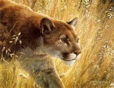 Mountain Lion Art of Carl Brenders Wildlife Paintings, Wildlife Art, Animal Paintings, Big Cats Art, Cat Art, Lion Pictures, Animal Pictures, Image Chat, Lion Art