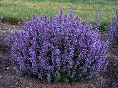 Flower Landscape, Landscape Design, Garden Design, Flowers Perennials, Planting Flowers, Flowers Garden, Flower Gardening, Flower Plants, Planting Bulbs
