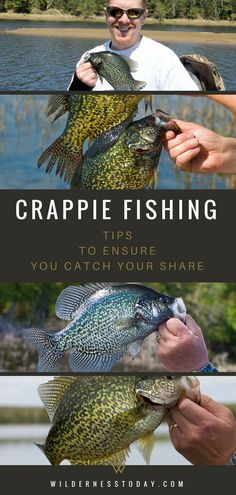 Fishing Tips: How To Catch Black & White Crappie Who doesn't love fishing for Crappie in the Summer? One of our favorite fish, the White and Black Crappie are some of the best tasting fish you can catch in the United States. United United may refer to: Crappie Fishing Tips, Catfish Fishing, Fly Fishing Tips, Gone Fishing, Carp Fishing, Best Fishing, Saltwater Fishing, Kayak Fishing, Fishing Shirts