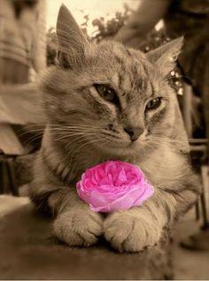 Que todo caminho que eu andar tenha flores. E se não tiver que eu as plante...  {Lu Andrade}  Sirlei Pancoti 3  @[270588902994980:274:Anjos Animais]   Foto: Google Imagens