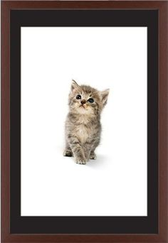 Kitten Framed Print, Brown, Contemporary, Cream, Black, Single piece, 20 x 30 inches