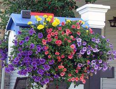 Classic Americana painted with Krylon Fusion Blue Hyacinth and filled with Calibrachoa mini-petunias Mailbox Planter, Mailbox Garden, Chalk Paint Projects, Diy Projects, Americana Paint, Blue Hyacinth, Petunias, Container Gardening, Planters