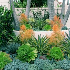 Awesome Succulent Garden Ideas For Incredible 15 Succulents Garden Ideas For Your Front Yard Succulent Landscaping, Tropical Landscaping, Succulents Garden, Backyard Landscaping, Tropical Gardens, California Front Yard Landscaping Ideas, Tropical Backyard, Succulent Plants, Small Gardens