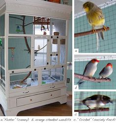 BRILLIANT !! it's an old shrunk/wardrobe stripped down & turned into an aviary for your winged friends. much cooler than the pet store cage