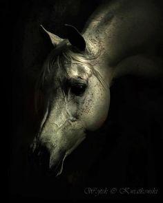 #Horses.  A face......