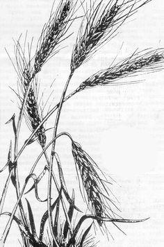 linework wheat tattoo - Google Search