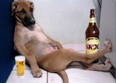 Sad dog wants to drink more - funniest drunk dog funny animal videos, funny animals Funny Animal Pictures, Funny Photos, Funny Images, Animal Pics, Funny Animal Videos, Funny Animals, Cute Animals, Funny Videos, Animals Dog