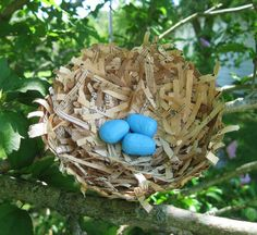 Items similar to Paper Mache Bird Nest and Robin's Eggs-Small, Shabby Bird Nest, Folkart, Upcycled on Etsy Bird Cages, Bird Nests, Art Projects, Projects To Try, Crafts For Kids, Arts And Crafts, Teen Art, Origami Paper Art, Paper Mache Crafts