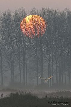 Barn Owl - Sunrise by Nigel Blake