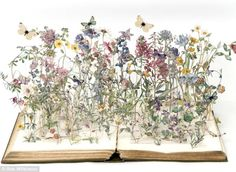 A paper sculpture from the Wild Flowers Of Britain series, which brings the book's original illustrations to life