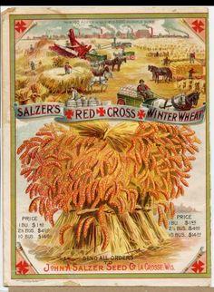 savingmorethanme.com winter wheat seed label vintage
