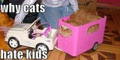 Why cats hate kids...