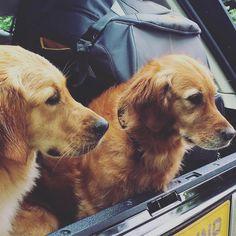 Amira & Melachi Mika's dogs