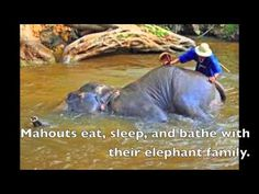 Leslie Whitaker - Book Trailer - Tua and the Elephant