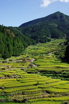 Rice Terraces, Shinshiro, Aichi, Japan 新城市四谷千枚田