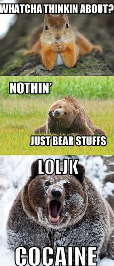 Cocaine Bear is just ridiculous, but it still makes me laugh...