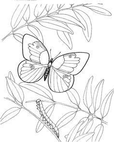 papillon dessin à colorier et imprimer