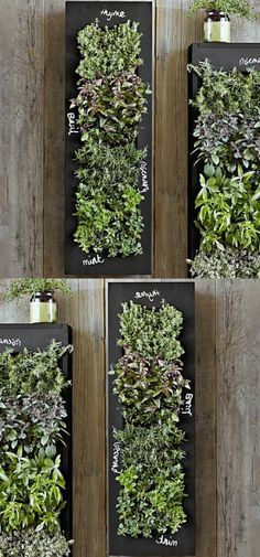 Bring your wall to life with a stunning vertical herb garden. #kitchendecor #livingroomideas #laundryroomideas #home #homedecor #bedroomdecor #livingroomdecor #bedroomdecor #bathroomdecor #bathroomideas #ad #shopping #farmhousedecor #rustichomedecor (scheduled via http://www.tailwindapp.com?utm_source=pinterest&utm_medium=twpin)