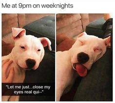 Animal Memes to Make You Laugh on Bad Days - 15